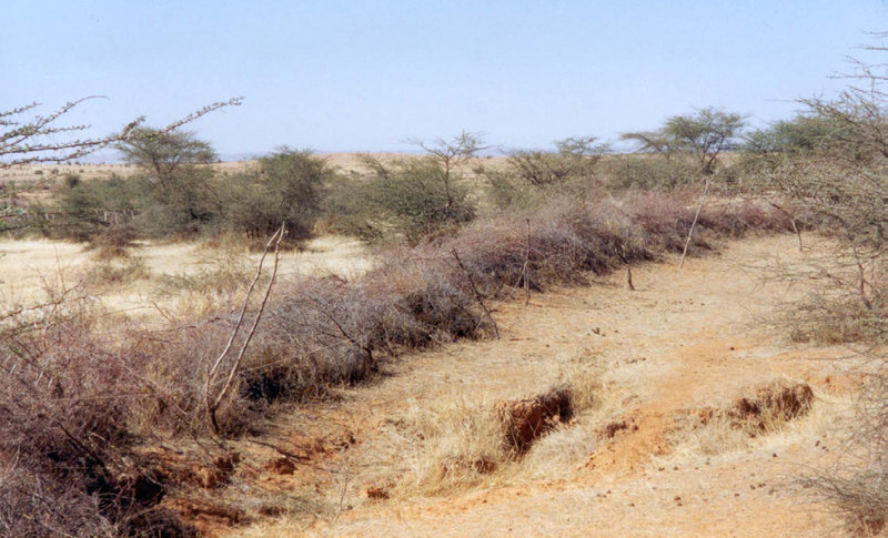 Barren land in Mauritania