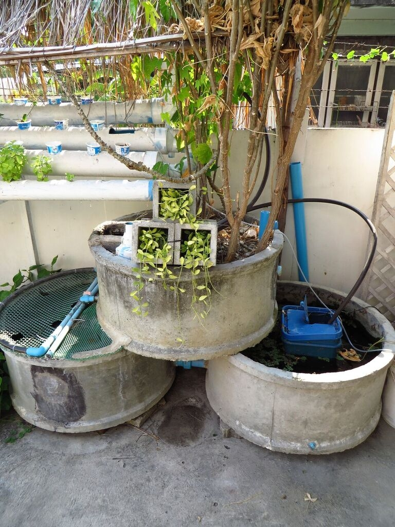 A low-cost concrete ring aquaponics system 15