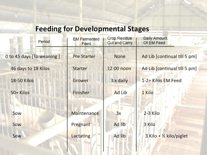 Hog Feed Production 12