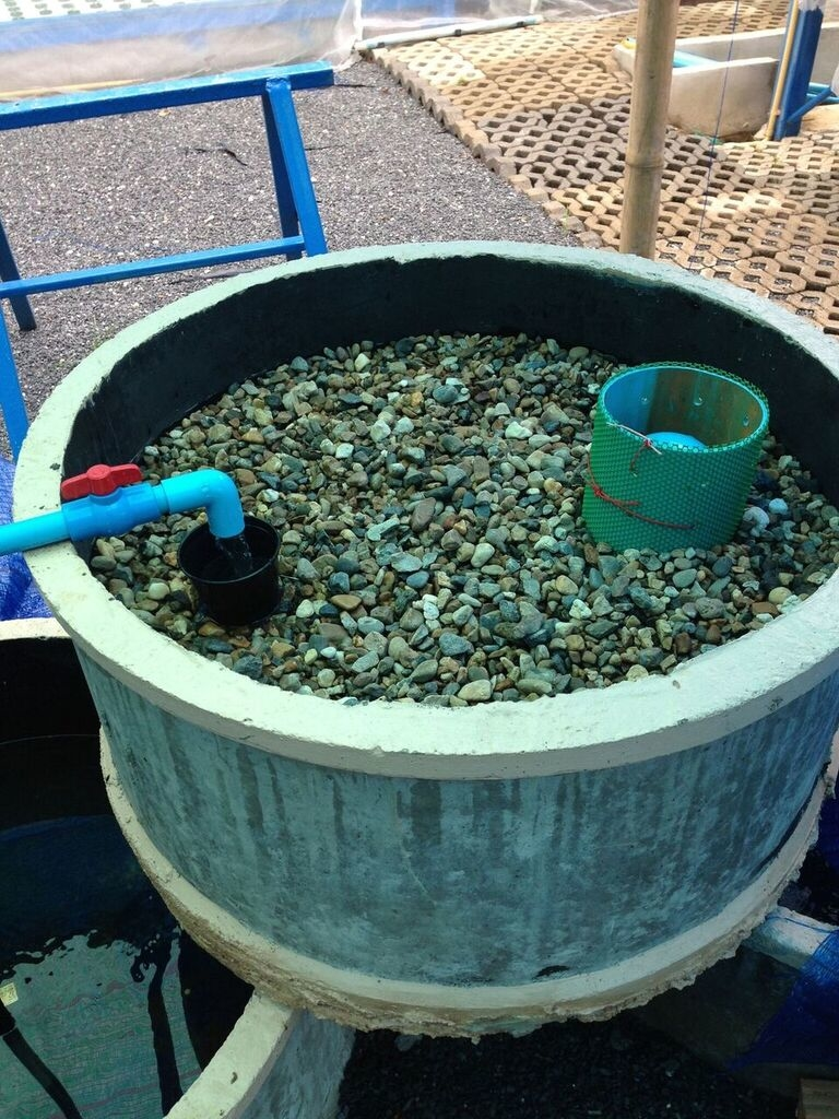 A low-cost concrete ring aquaponics system 6