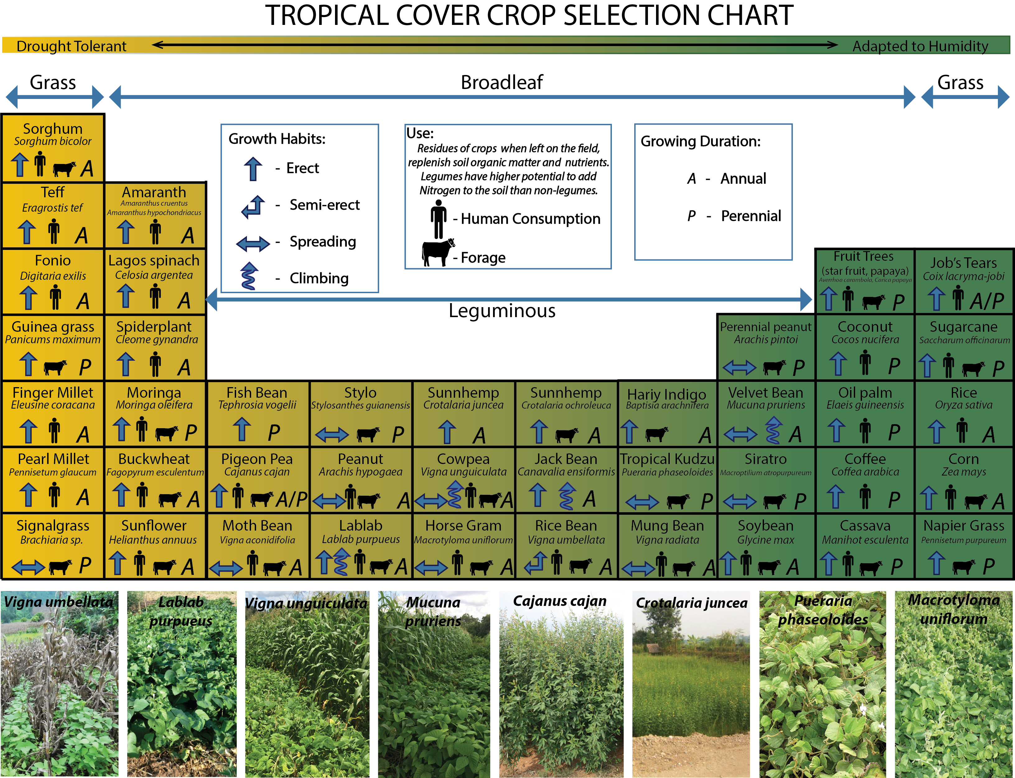 Tropical Cover Crop Selection Chart