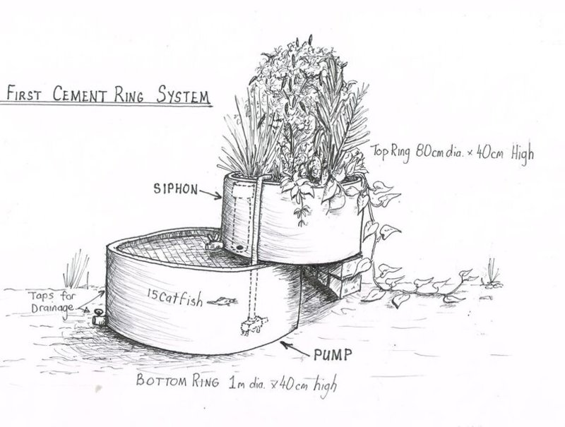 Lessons from Cement Ring Aquaponics