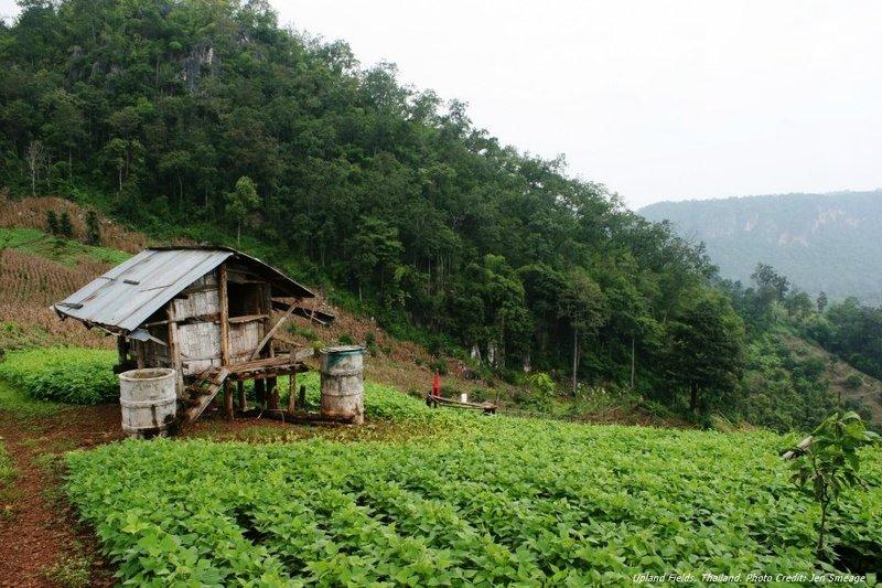 Asian Farm