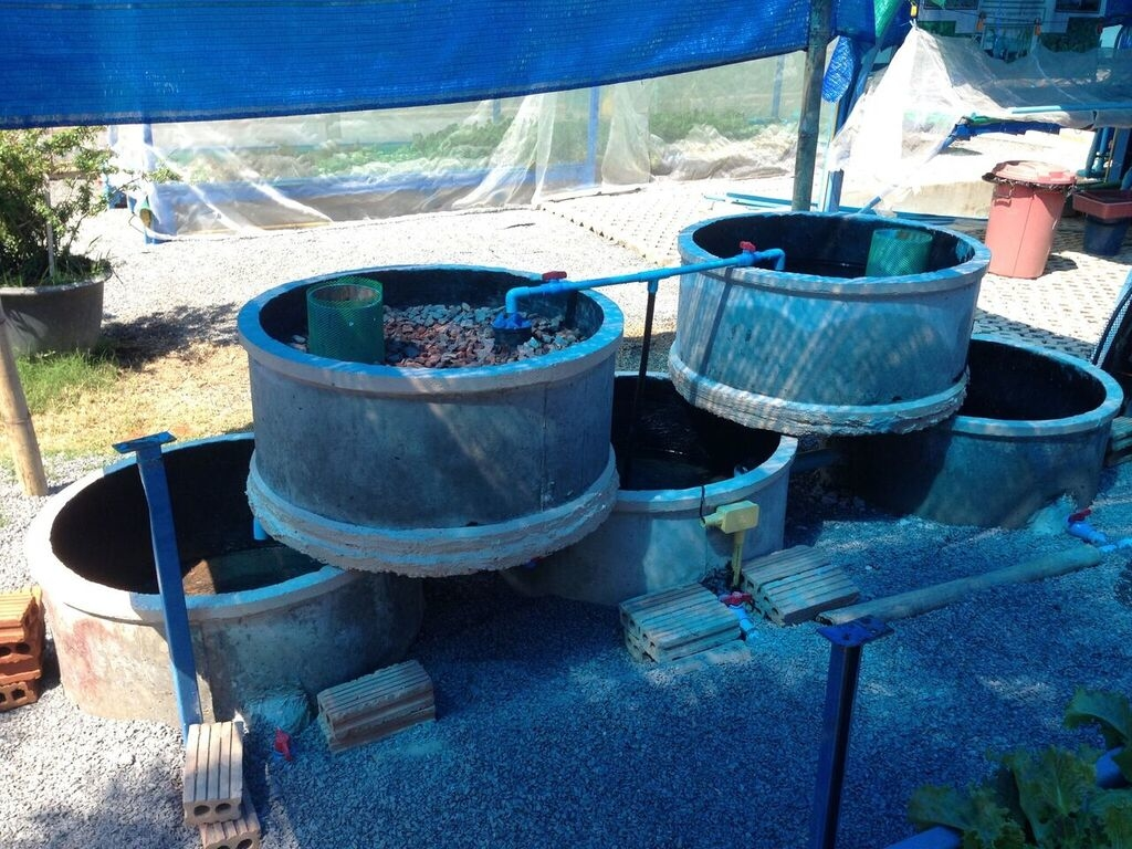 A low-cost concrete ring aquaponics system 3