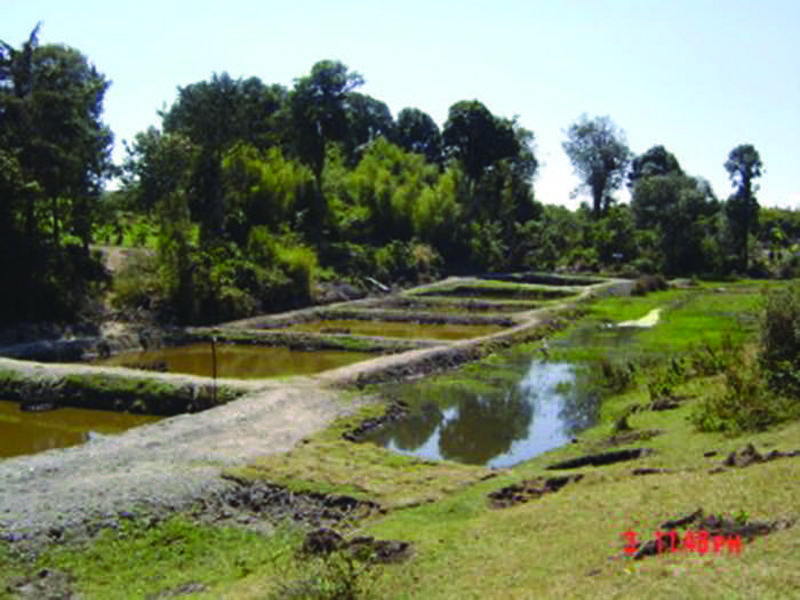 Fish ponds in series