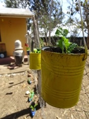 Kitchen gardens and innovative kids - growing together at Plaster House