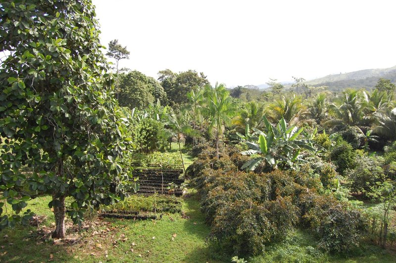 Frutas del Mundo Farm with its lush landscape