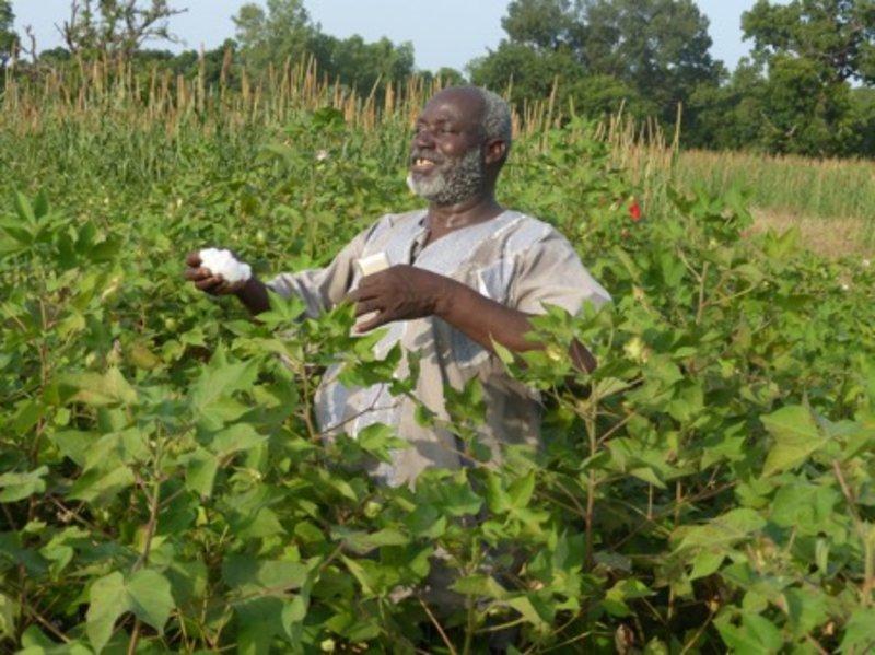 Success stories from Sanekui, Mali