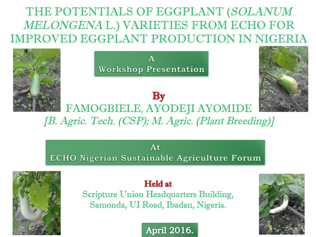 The Potential of Eggplant Varieties from ECHO for Improved Eggplant Production in Nigeria