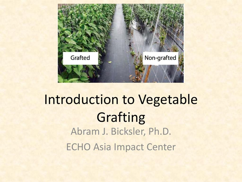 Introduction to vegetable grafting  0