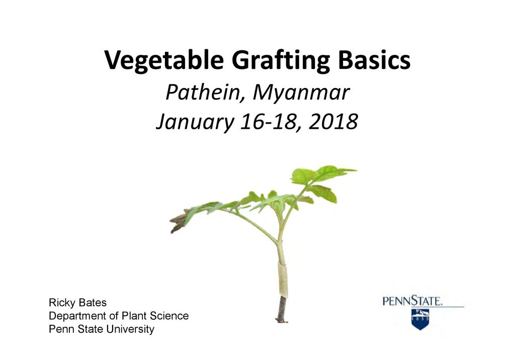 Vegetable Grafting