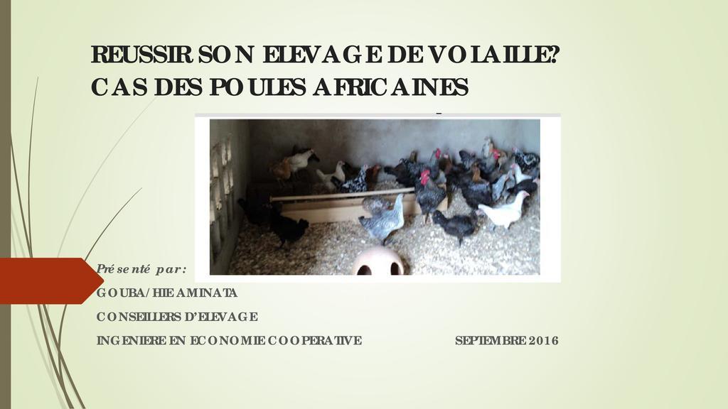 Réussir son élevage de volailles, cas des poules africaines
