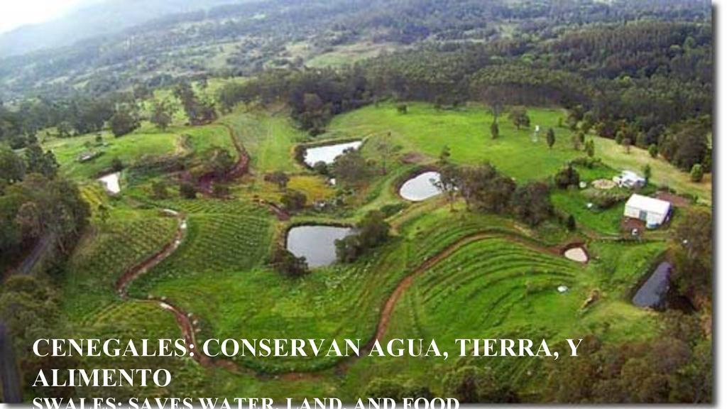 Cenegales: Conservan Agua, Tierra, y Alimento