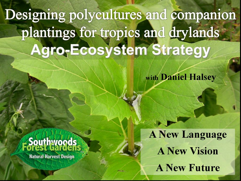 Designing polyculture and companion plantings for tropics and drylands