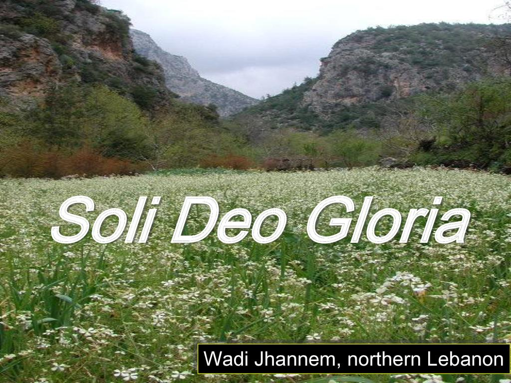 Bible  Plants - Plants of the Bible and Qur'an