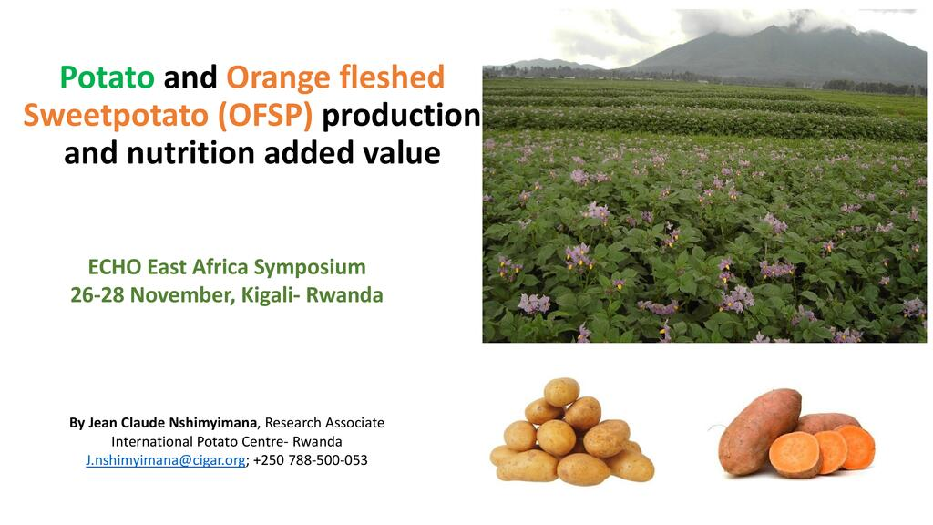 Orange fleshed sweet potato (OFSP) production and its added nutritional value