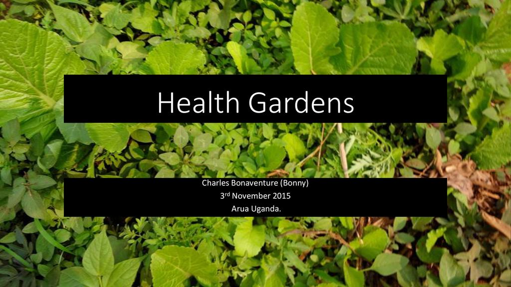 Kitchen gardens, easy techniques for home vegetable production