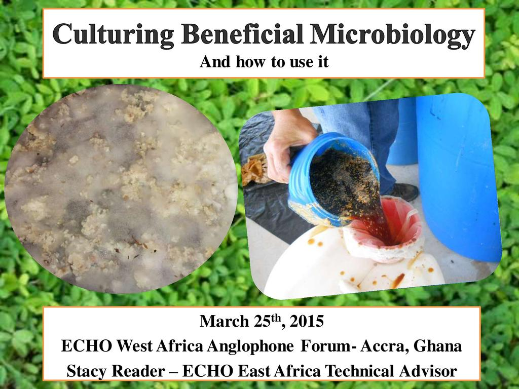 Culturing Beneficial Micro-organisms