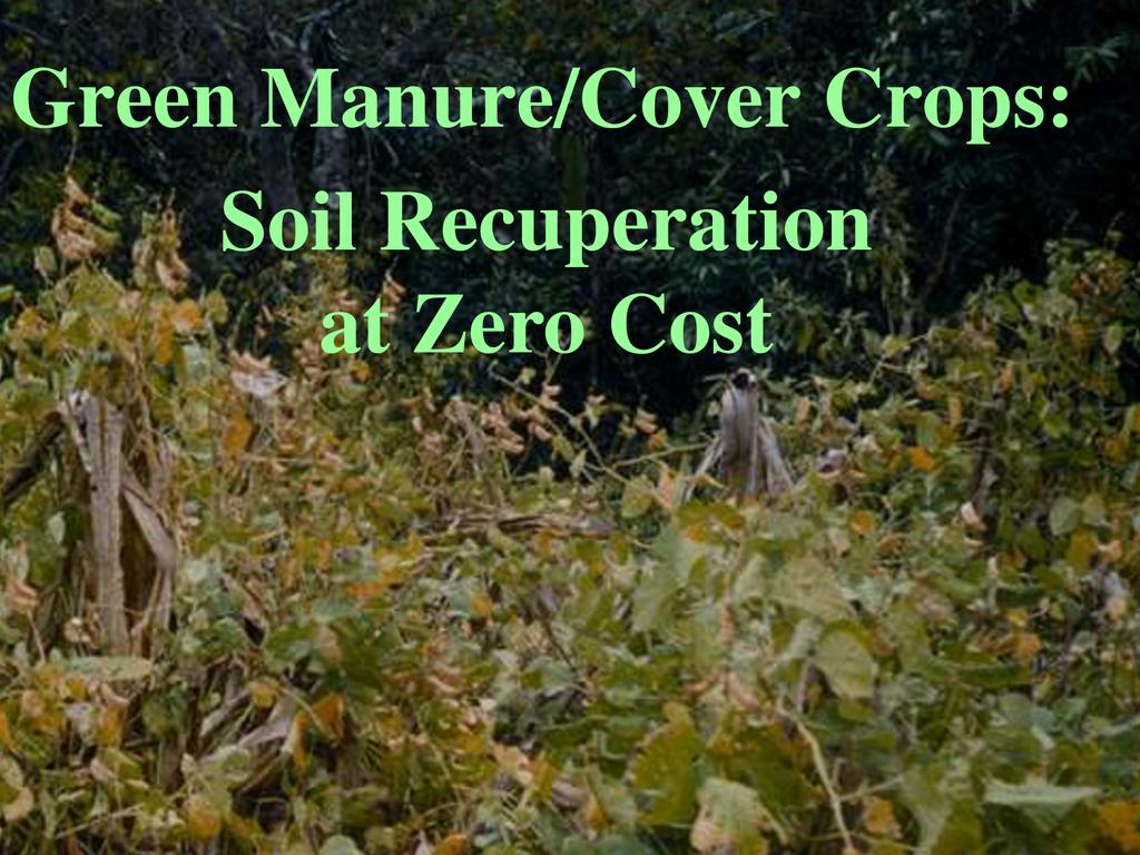 Restoring the soil the potential uses of green manure for Uses of soil in english
