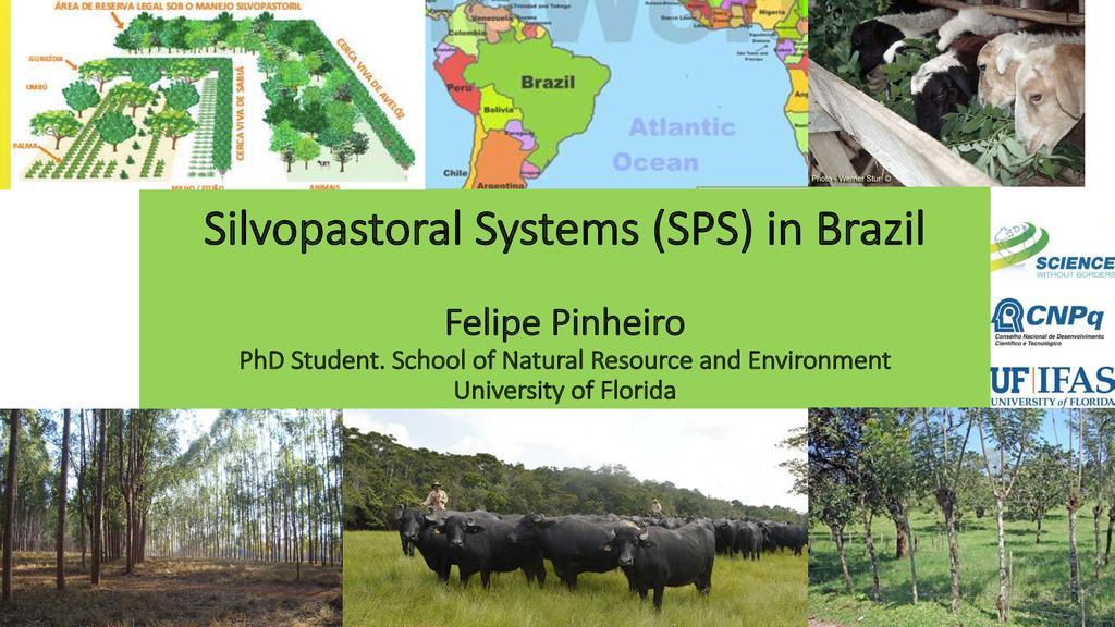 Silvopastoral systems in Brazil