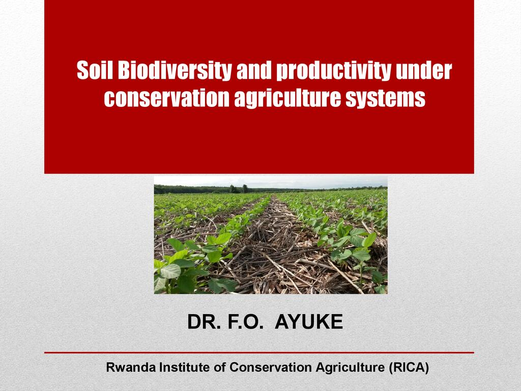Soil biodiversity and productivity