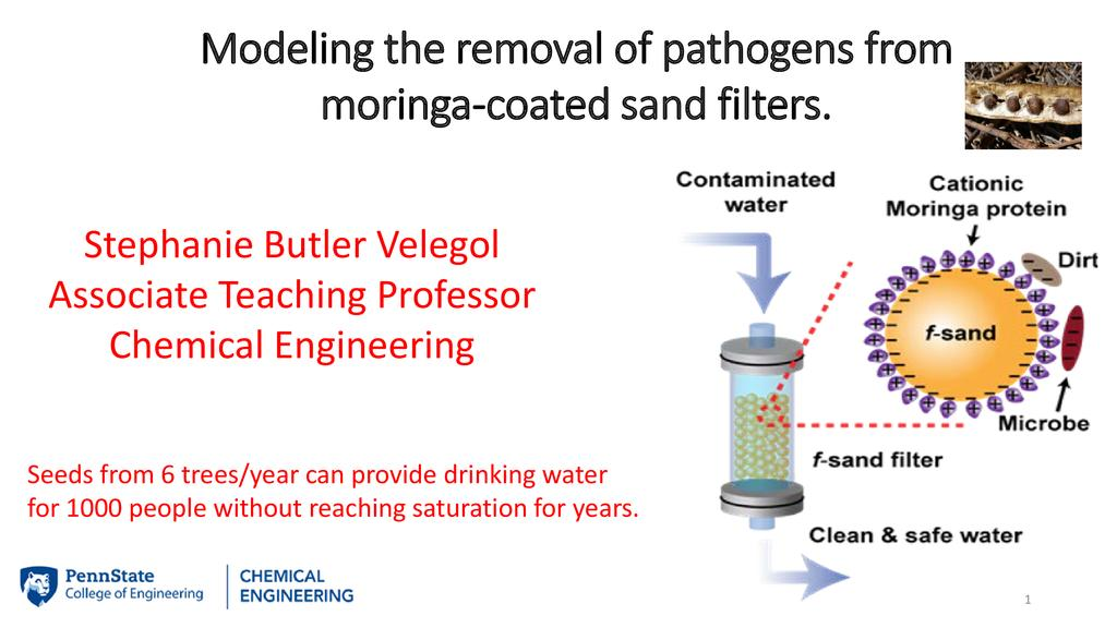 Moringa-coated sand filters as a sustainable solution for clean water
