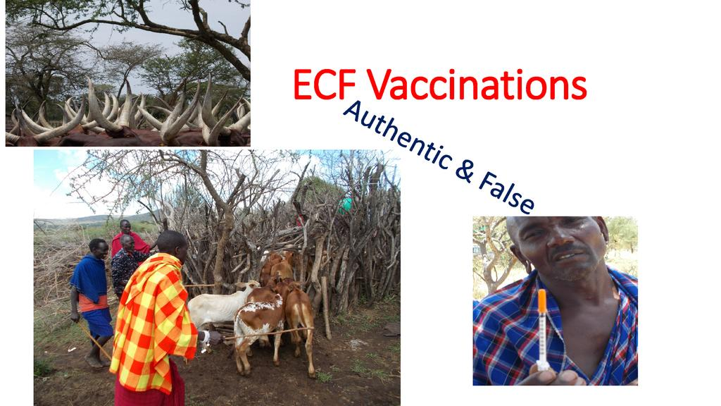How to avoid fraudulent vaccinations