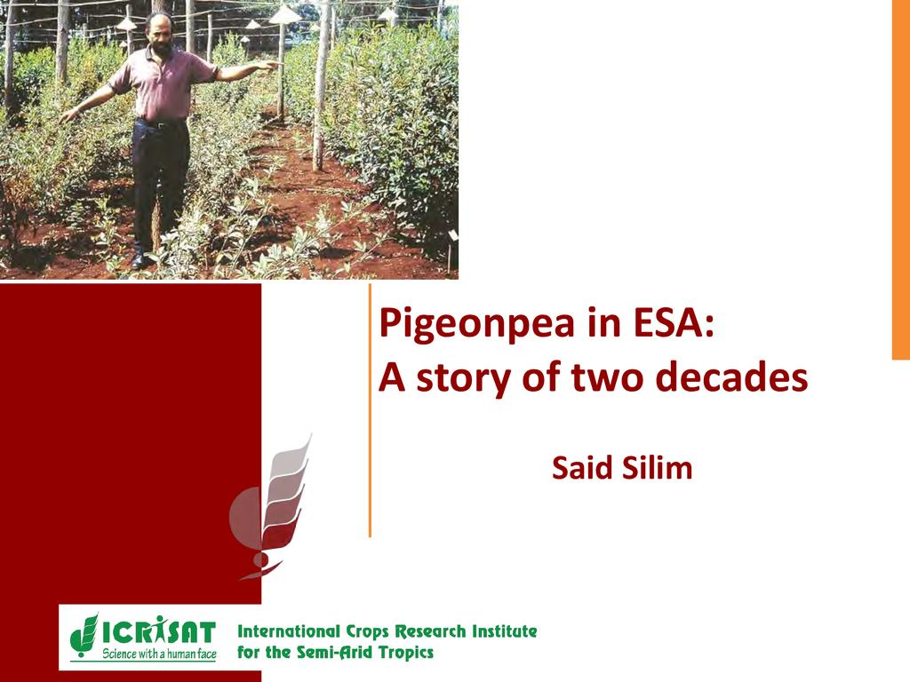 The rise of pigeon peas in importance  0