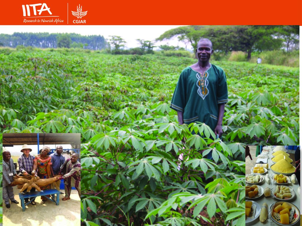 Best Practices on Cassava Production, Processing and Marketing for Small Scale Farm Holders