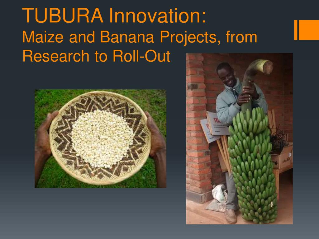 TUBURA Innovation: Maize and Banana Projects, from Research to Roll-Out