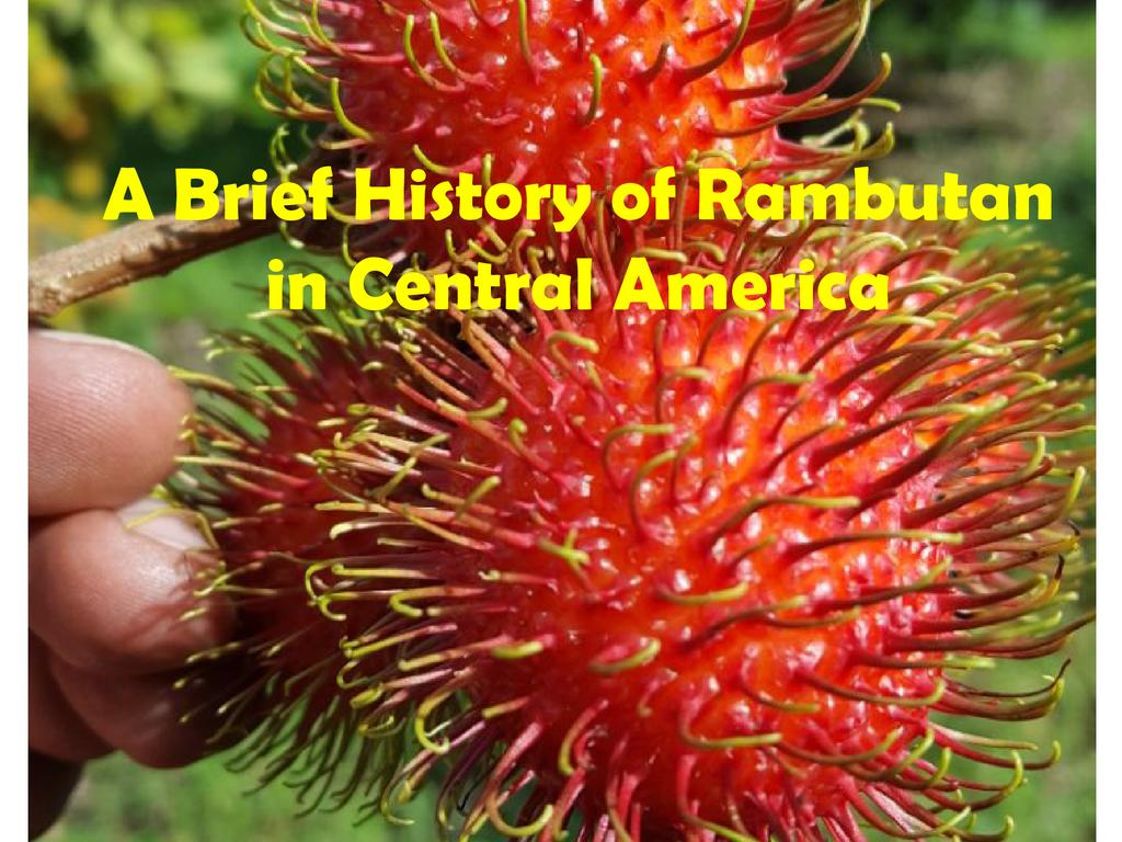 A brief history of rambutan in Central America