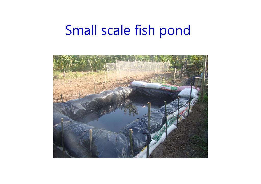 Small scale fish pond for Small pond fishing