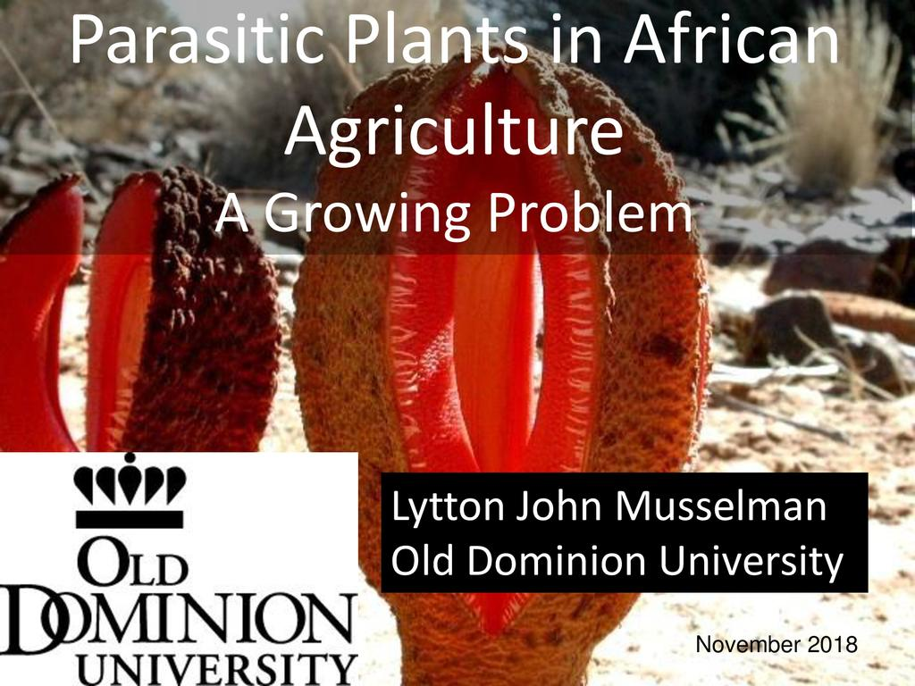 Parasitic plants in African agriculture—A growing problem