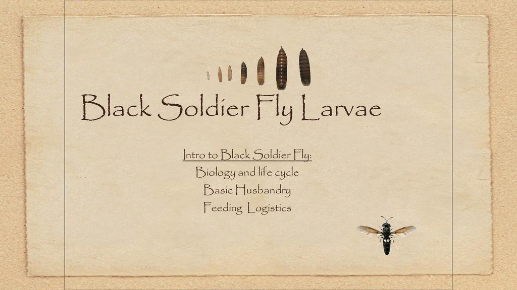 An Introduction to Soldier Fly Production