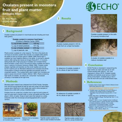 Ern 1 oxalates present in monstera fruit and plant matter thumbnail 0