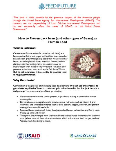 How to process jack bean and other types of beans as human food  0